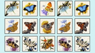 Panel Butterflies & Moths 9800